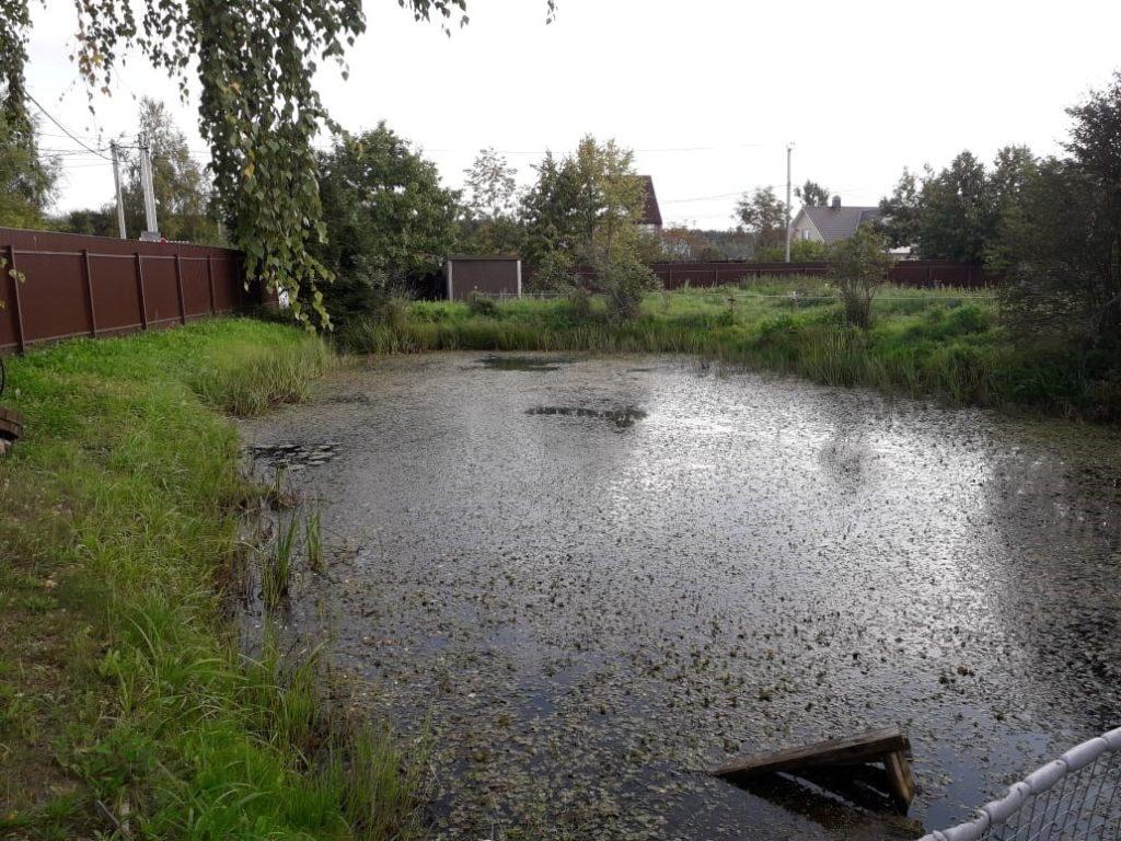 Когда требуется очистка пруда от ила?