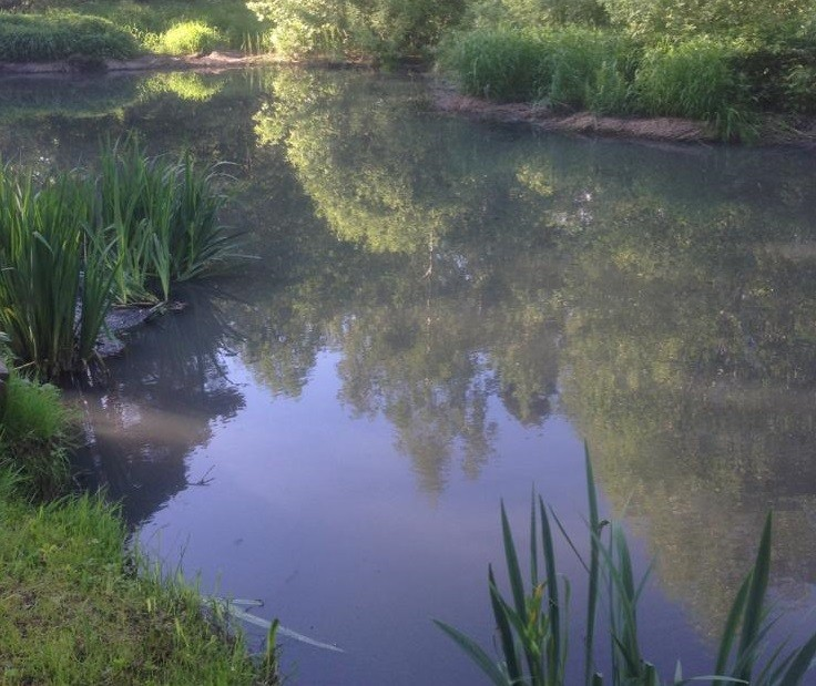 Чистка пруда мини-земснарядом без откачки воды